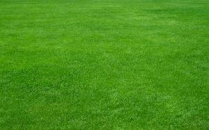perfect green grass